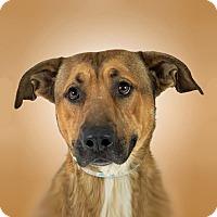 Adopt A Pet :: Eli - Prescott, AZ