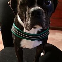 Adopt A Pet :: Darwin - Sanger, TX