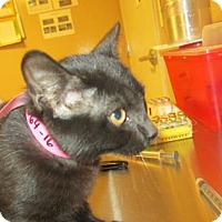 Adopt A Pet :: Glitter - Cumming, GA