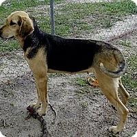 Adopt A Pet :: Bianca - St, Augustine, FL
