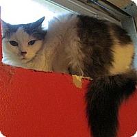 Adopt A Pet :: Jammer - Richland, MI