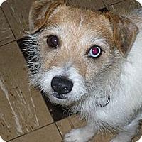 Adopt A Pet :: JONIE - Wisconsin Dells, WI
