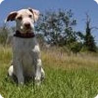 Adopt A Pet :: Daffodil - Sugarland, TX