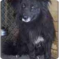 Adopt A Pet :: Curley - Carencro, LA