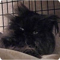 Adopt A Pet :: Onyx - Davis, CA