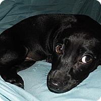 Adopt A Pet :: Gail - Jarrettsville, MD