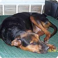 Adopt A Pet :: Tuffie - Andrews, TX