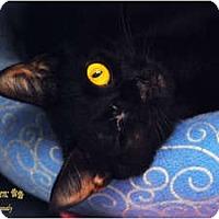 Adopt A Pet :: Solange - Encinitas, CA