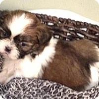 Adopt A Pet :: Delta - Winchester, VA