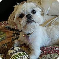 Adopt A Pet :: Benny - Encinitas, CA