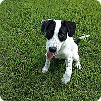Adopt A Pet :: Stanley - Plainfield, IL