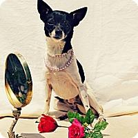Adopt A Pet :: Prissy - Harrodsburg, KY