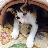 Adopt A Pet :: Linus - Trevose, PA