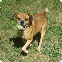 Adopt A Pet :: 1-12 Max - Triadelphia, WV