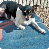 Adopt A Pet :: Misty - West Hartford, CT