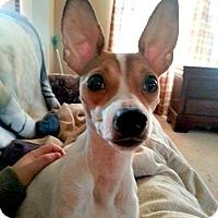 Adopt A Pet :: Matilda - Indianapolis, IN