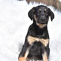 Adopt A Pet :: Sylvie - Groton, MA