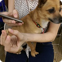 Adopt A Pet :: Kiwi - Ogden, UT