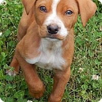 Adopt A Pet :: Titan (6 lb) Green Eyes! - SUSSEX, NJ