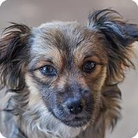Adopt A Pet :: Portland - Eugene, OR