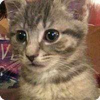 Adopt A Pet :: Donald & Elwood - York County, PA