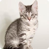 Adopt A Pet :: Peter - Savannah, GA
