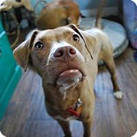 Adopt A Pet :: Charsky - Salt Lake City, UT