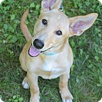 Adopt A Pet :: Carlin - Elizabethtown, PA