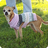 Adopt A Pet :: Nikita - Shelby, MI