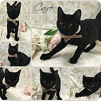 Adopt A Pet :: Cairo - Joliet, IL