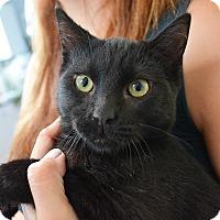 Adopt A Pet :: Jem - Los Angeles, CA