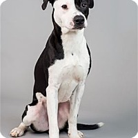 Adopt A Pet :: Hendrix - Raleigh, NC