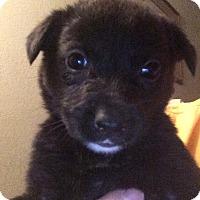 Adopt A Pet :: Monroe - Cave Creek, AZ