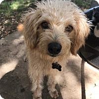 Adopt A Pet :: Prince Harry - Austin, TX