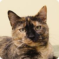 Adopt A Pet :: Maggie - Monroe, MI