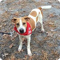 Adopt A Pet :: Pauly - Voorhees, NJ