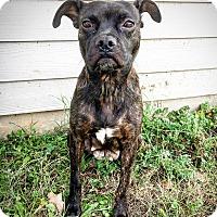 Adopt A Pet :: Aleah - Fredericksburg, TX