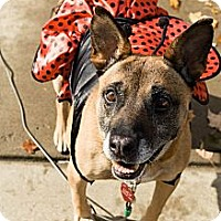 Australian Cattle Dog/Shepherd (Unknown Type) Mix Dog for adoption in Youngstown, Ohio - Lucy - Sanctuary Dog