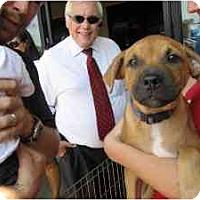 Adopt A Pet :: Albert - Alexandria, VA