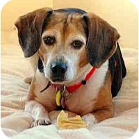 Adopt A Pet :: Cyrus - Novi, MI