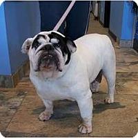 Adopt A Pet :: Scarlett - Gilbert, AZ
