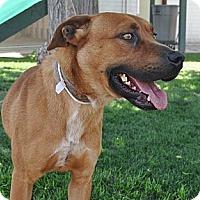 Adopt A Pet :: Thumper - Phoenix, AZ