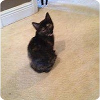 Adopt A Pet :: Baby Tortie - Mobile, AL
