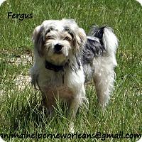 Adopt A Pet :: Fergus - Metairie, LA