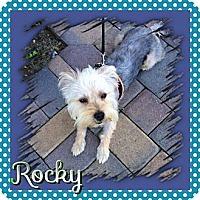 Adopt A Pet :: Rocky - Huntington Beach, CA