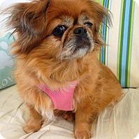 Adopt A Pet :: Ginger - Fennville, MI