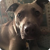 Adopt A Pet :: Lucy - Strongsville, OH