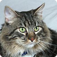 Adopt A Pet :: Ben V - Sacramento, CA