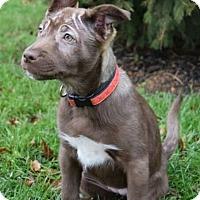 Adopt A Pet :: Cheyanne - New Oxford, PA