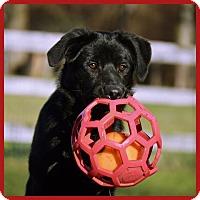 Adopt A Pet :: Eiko - Pleasant Plain, OH